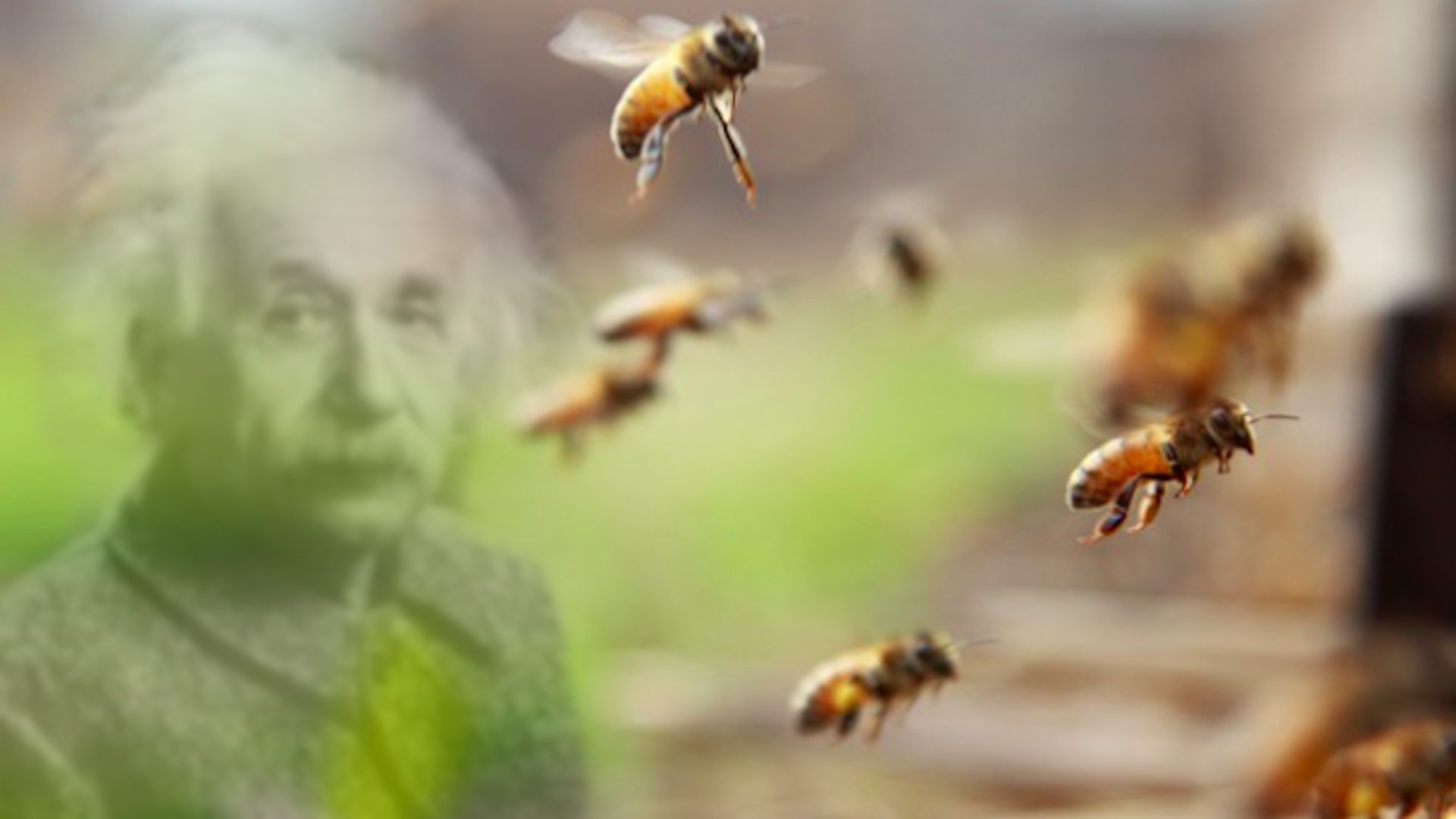 api einstain apicultura architettura